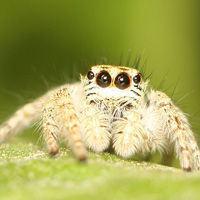 Especies de araña