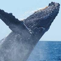 ballena destacada