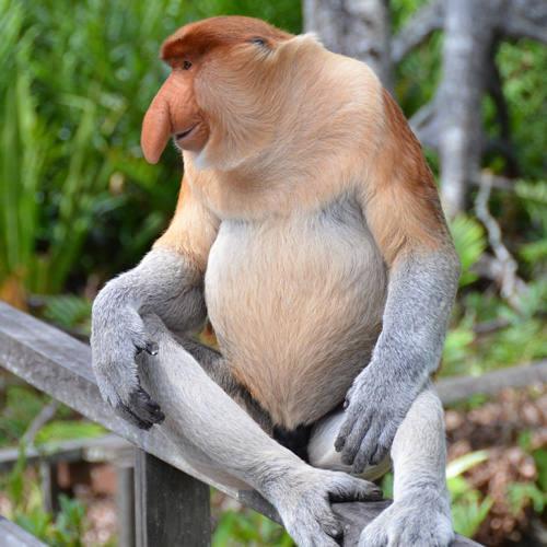MONO (Caractersticas, Tipos de Monos. - t) 42