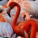 Variedad de flamencos