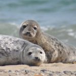 Pareja de focas