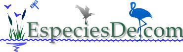 Especies de los animales