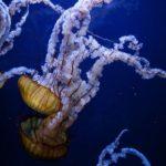 Bellas criaturas marinas