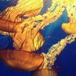 Grupo de medusas