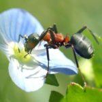 Otro tipo de hormiga