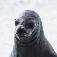 léon marino destacado