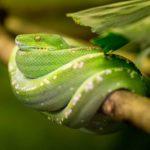 Serpiente enroscada