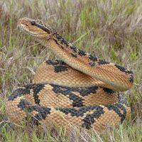 serpiente destacada