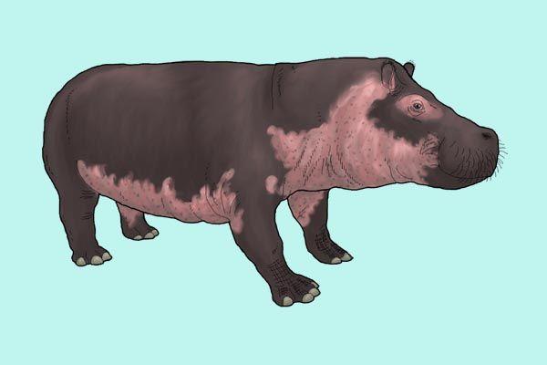 Hipopótamo enano de Madagascar
