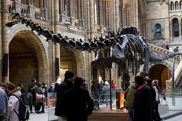 Dinosaurio diplodocus en exposición