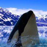 Especies de cetáceos