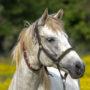 Especies de caballo