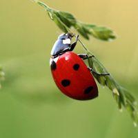 Especies de escarabajos